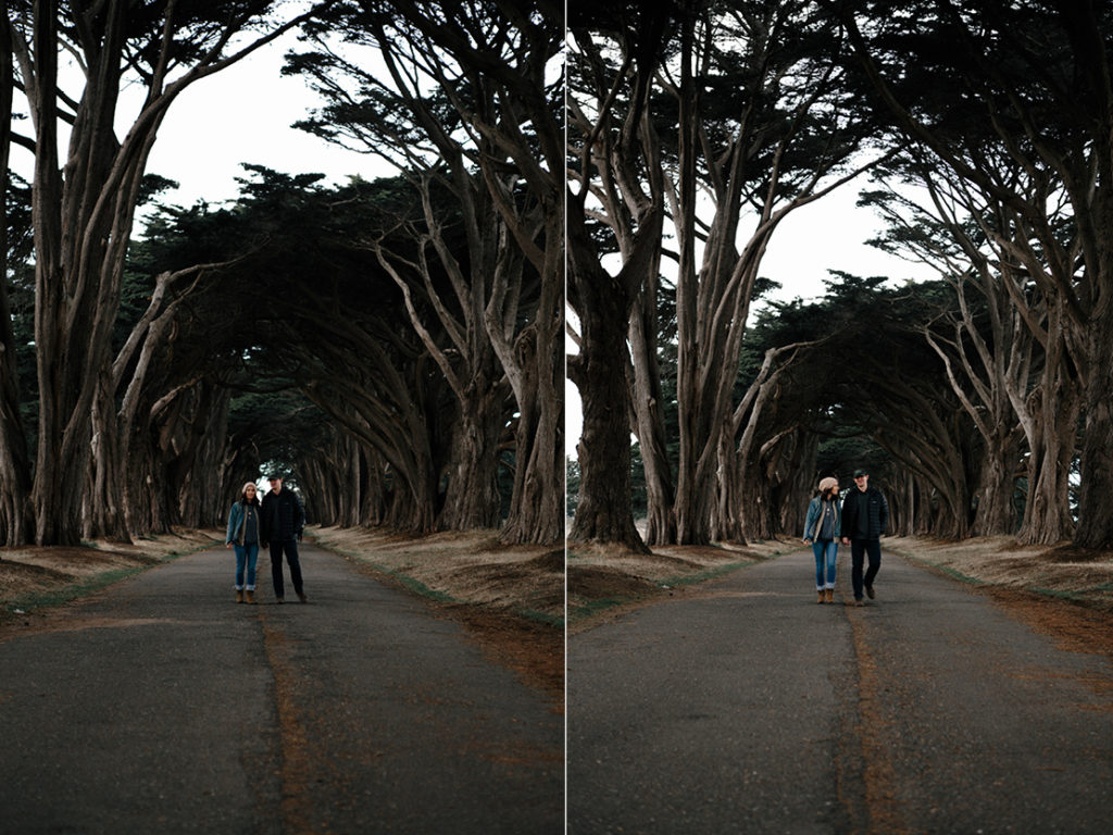 Beautiful walk through the cypress tree tunnel