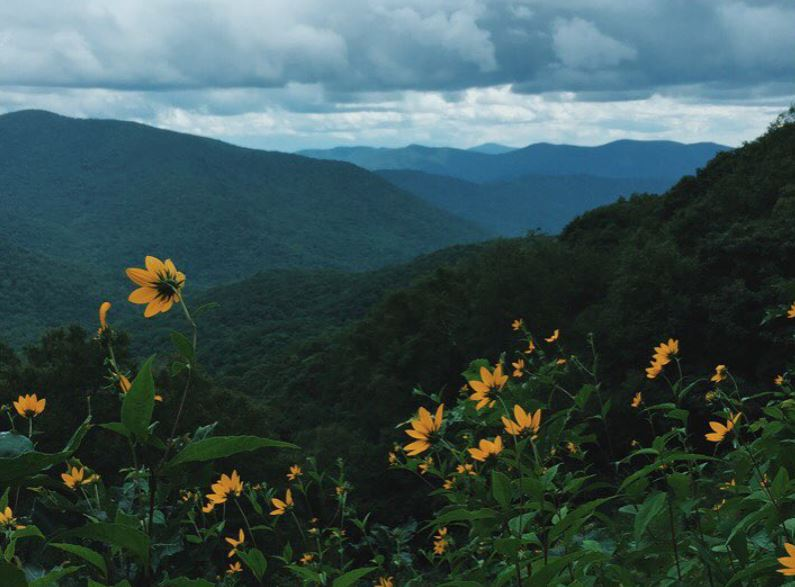 Sunflowers on green mountain side