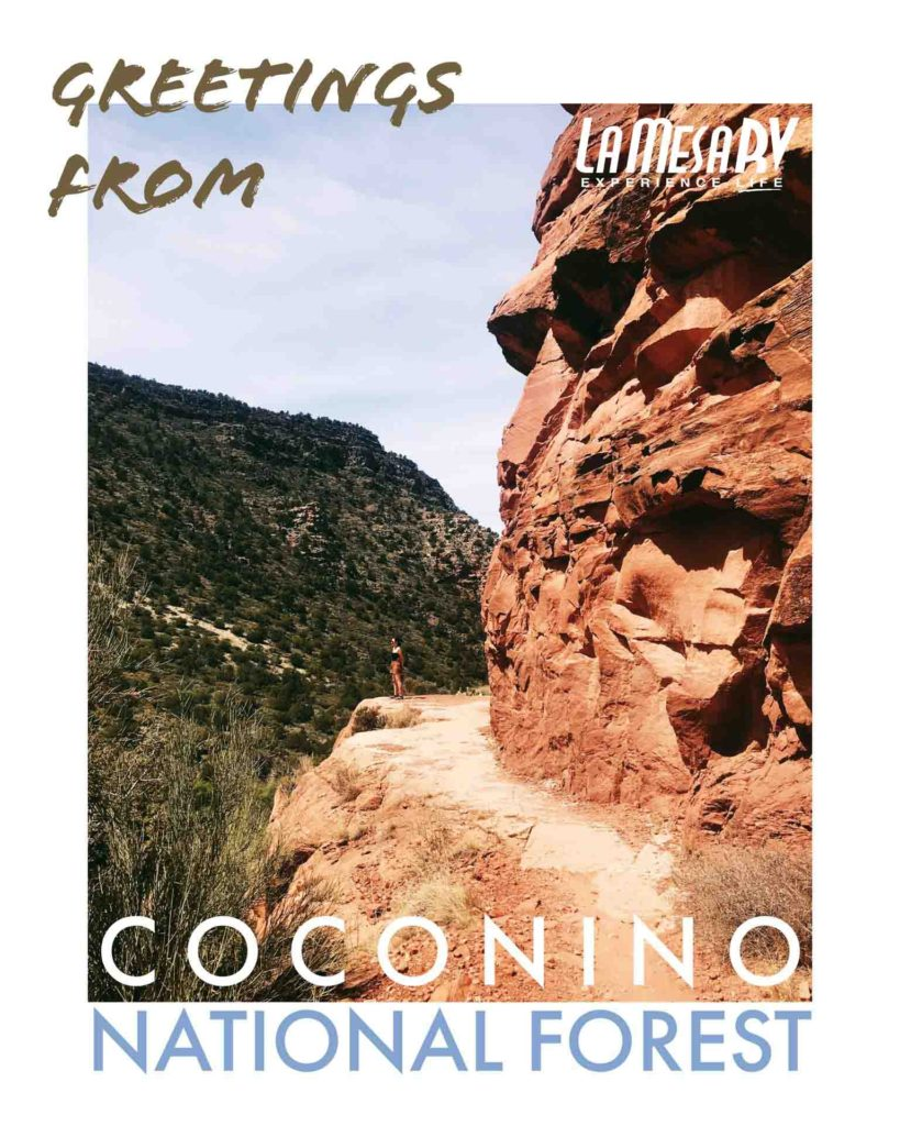 We Went To Coconino National Forest