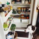 Organize Your RV Refrigerator