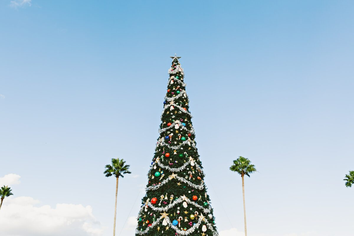 Christmas in Florida with Palm Trees and Christmas lights