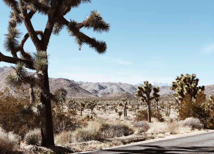 Top 10 Campgrounds in Joshua Tree, California