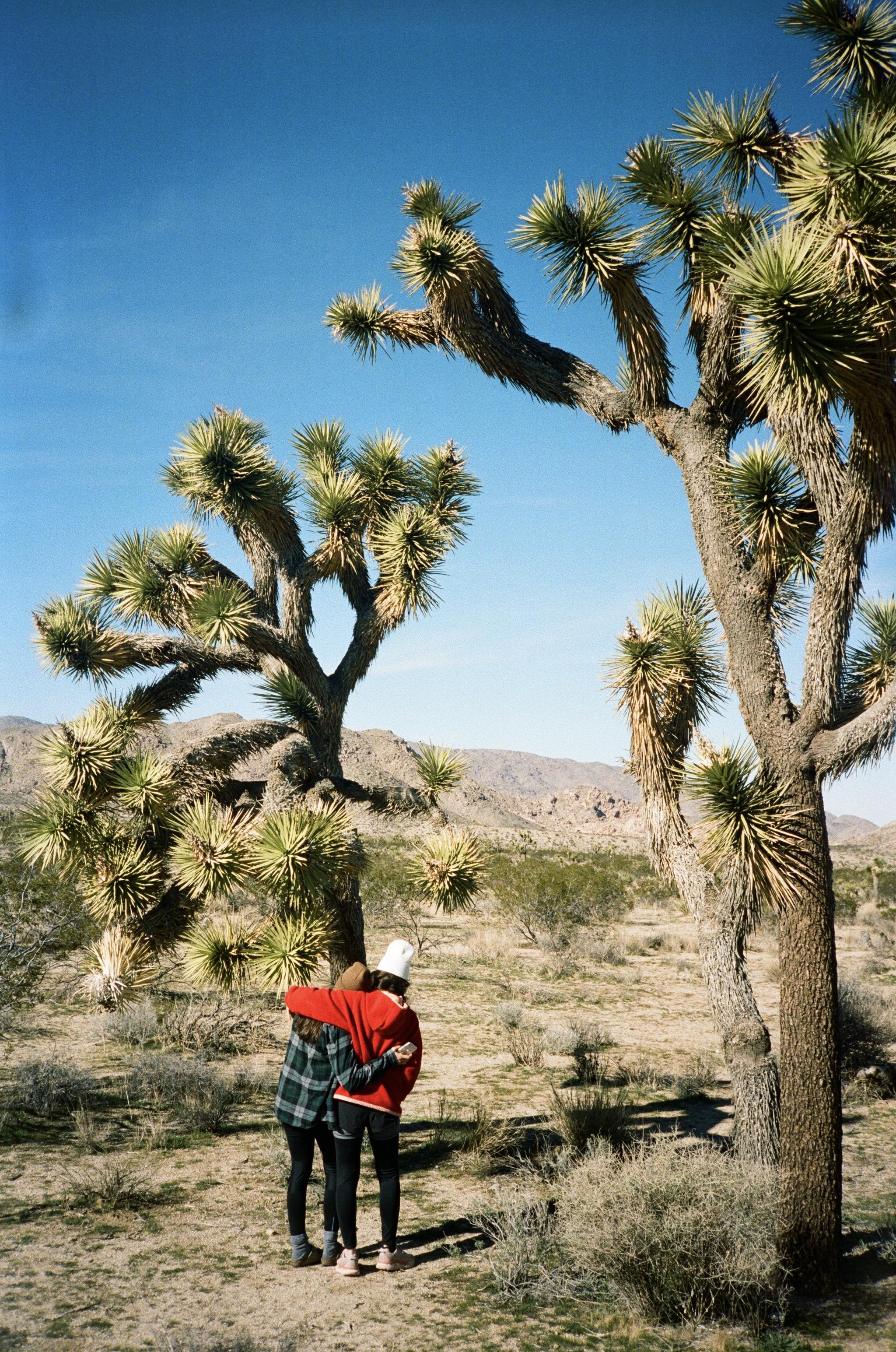 Governmen shutdown, joshua tree national park