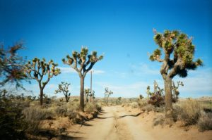 Top 10 Campgrounds in and around Joshua Tree California