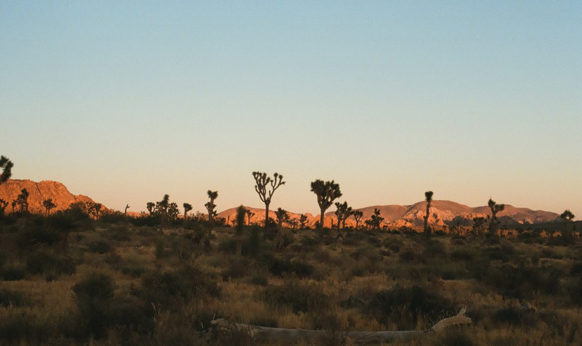 The Ultimate Road Trip Guide to Joshua Tree Part II