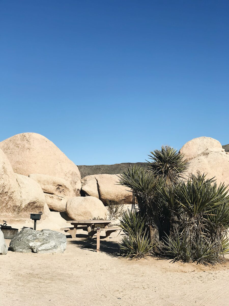 Best campgrounds for RVers in Joshua Tree National Park