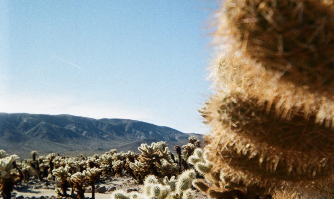 Survival Guide: Everything You Need to Know About RVing Joshua Tree