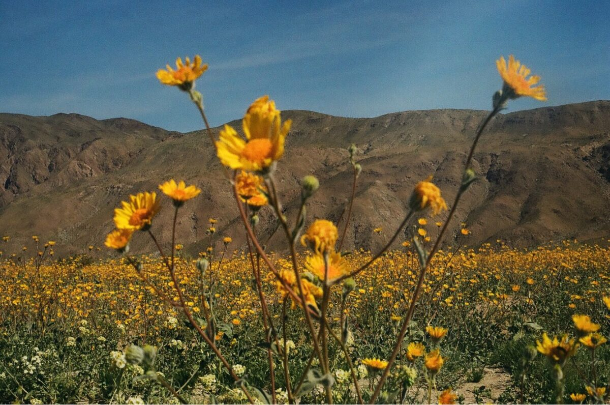 Chase the super bloom this 2019