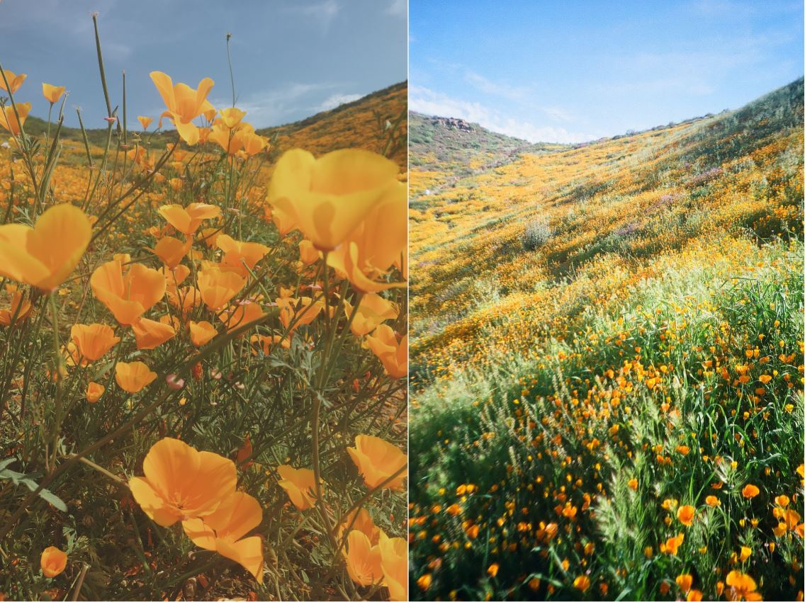 Desert southwest wildflowers are a must see this spring