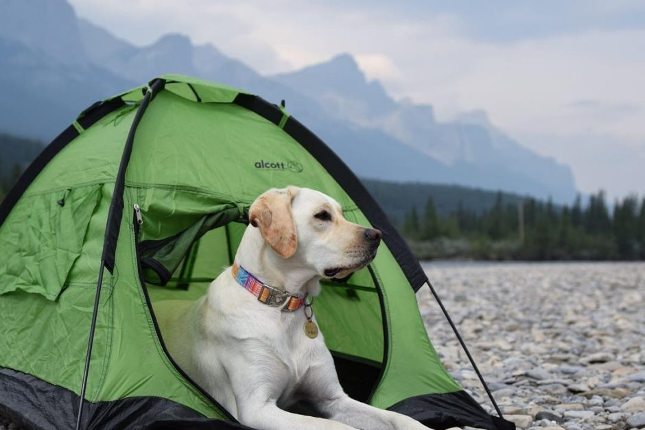 Top 10 Pet Friendly Campgrounds Across America