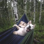 RVing with your dog, RVing with your cat