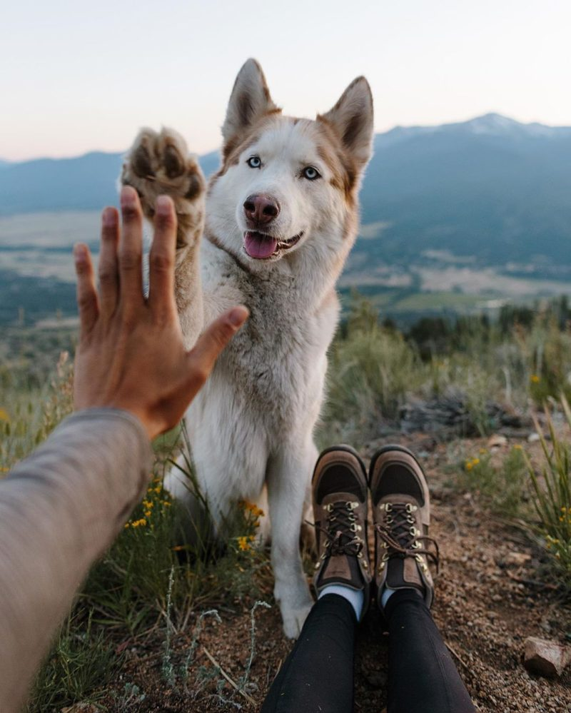 how to travel with a pet that has a medical condition