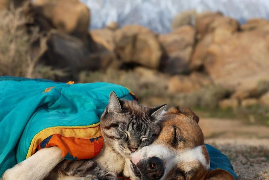 These Pet Road Trip Photos Will Make Your Heart Melt