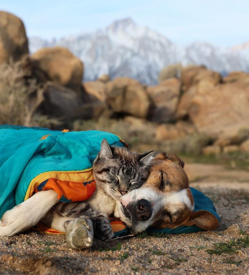 unlikely friends, pet rv travel