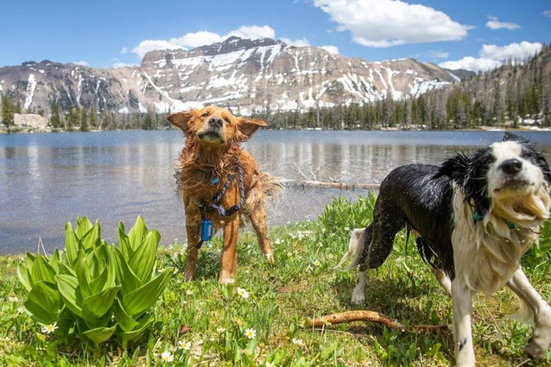 top 10 rv campgrounds made for pets