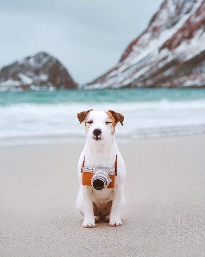 dogs who travel, cute puppy photos