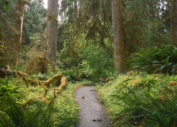 Olympic National Park RV Road Trip Guide Part II