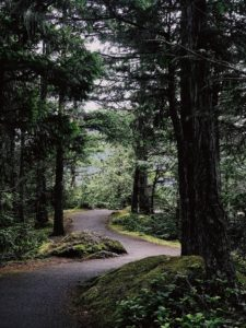 best hikes in Olympic National Park, packing for a hike in a rainforest