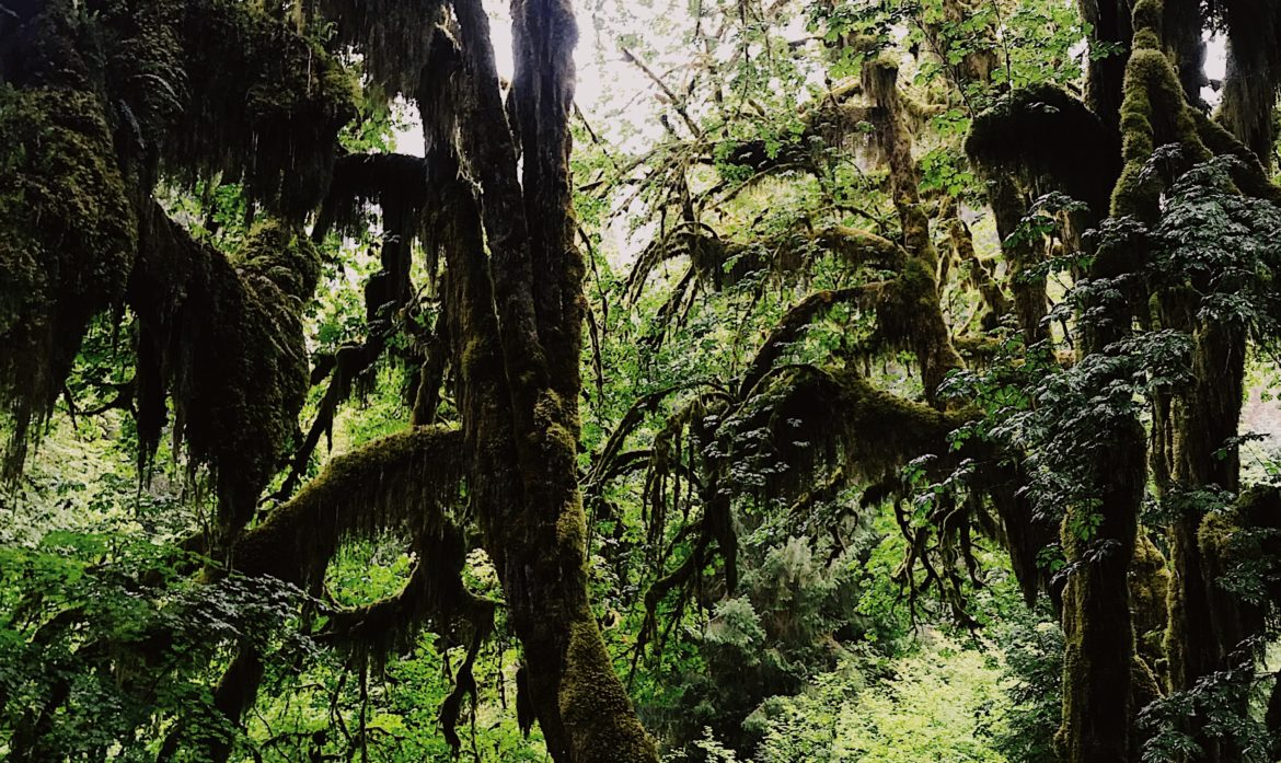 Everything You Need to Know and to Pack for a Hike in the Rainforest