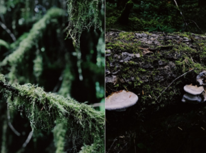 best gear for hiking in the Hoh Rainforest