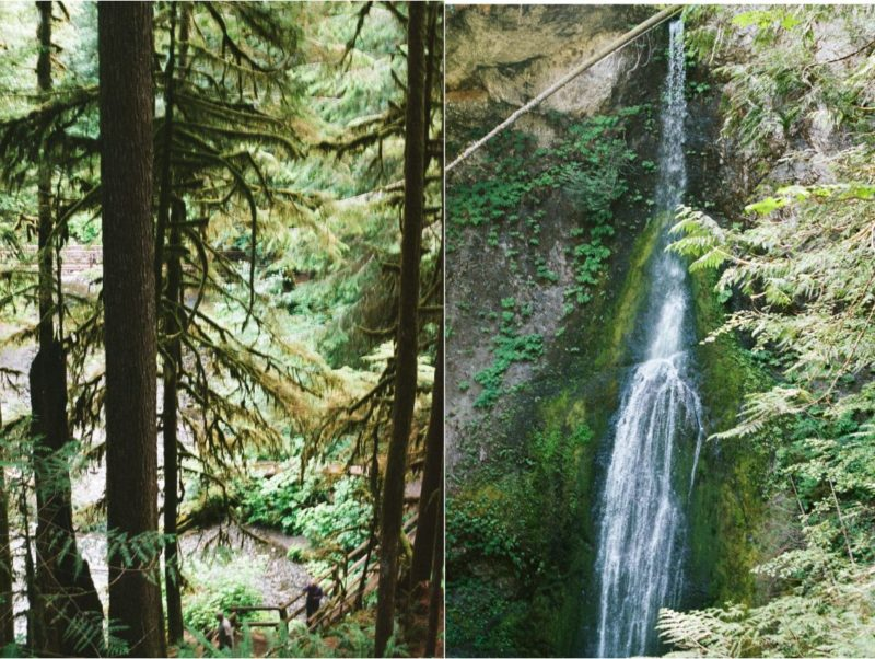 waterfall hike in olympic national park, old-growth