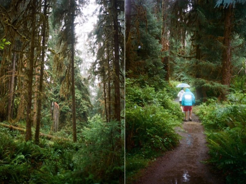 Hoh Rainforest in Olympic National Park