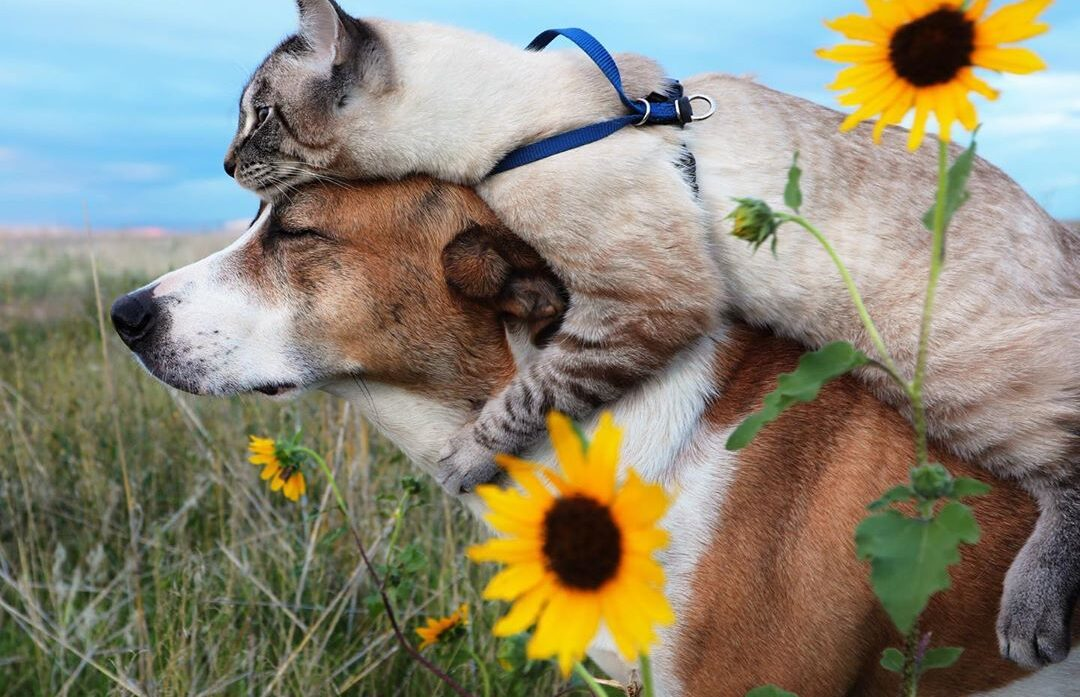 Everything You Need to Know About RVing With Your Pet